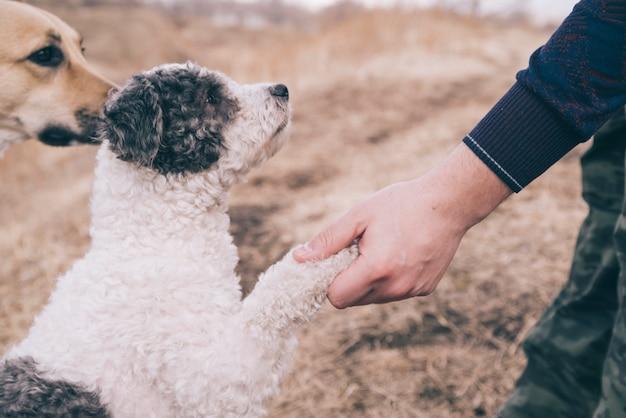 Person, die draußen mit hunden spielt Kostenlose Fotos