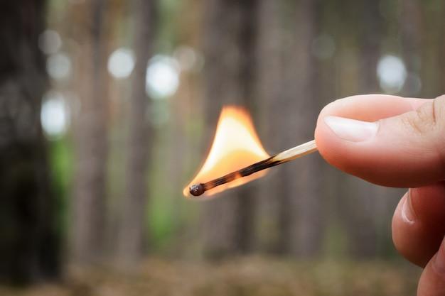 Person hält ein brennendes streichholz in einer hand in einem nadelwald Premium Fotos
