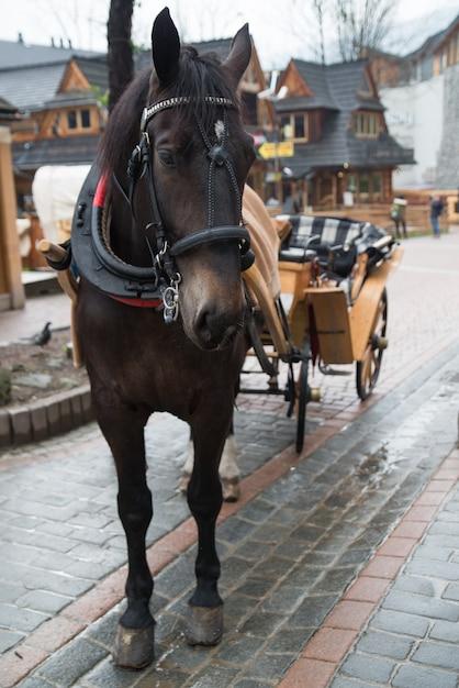 Pferd im dorf zakopane, polen, polen Premium Fotos