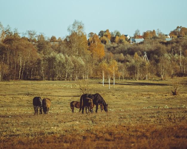 Pferd zu fuß Kostenlose Fotos