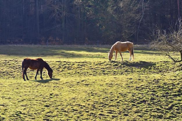 Pferde auf der wiese Kostenlose Fotos