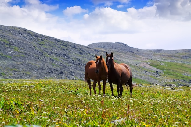 Pferde auf wiese Kostenlose Fotos