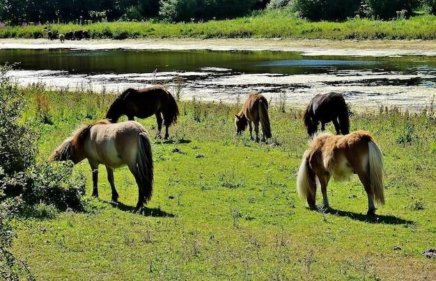 Pferde, die im tal nahe dem see in einer ländlichen gegend grasen Kostenlose Fotos