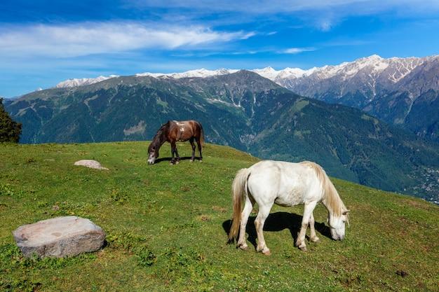 Pferde, die in bergen grasen Premium Fotos