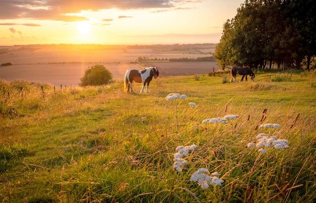 Pferde, die in einer ländlichen landschaft unter warmem sonnenlicht mit den blauen gelben und orange farben weiden lassen, die grasbäume und ausgestreckte ansicht weiden lassen Premium Fotos