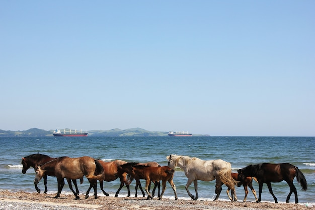 Pferde laufen an der küste entlang. seelandschaft mit tieren. Premium Fotos