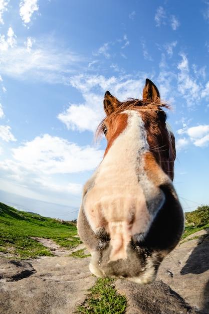 Pferde mit lustigen und neugierigen gesichtern in freiheit auf dem berg Premium Fotos
