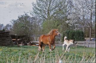 Pferde, natur Kostenlose Fotos