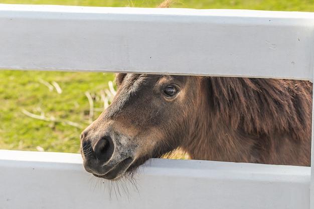 Pferde zwerge Premium Fotos