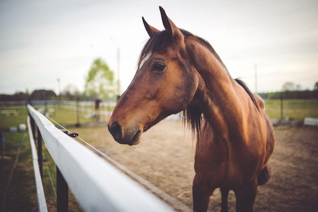 Pferdekopf nahaufnahme Kostenlose Fotos