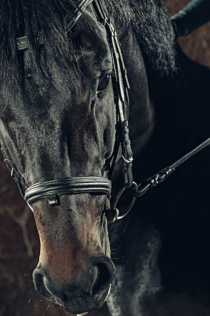 Pferdekopf-nahaufnahmeporträt Kostenlose Fotos