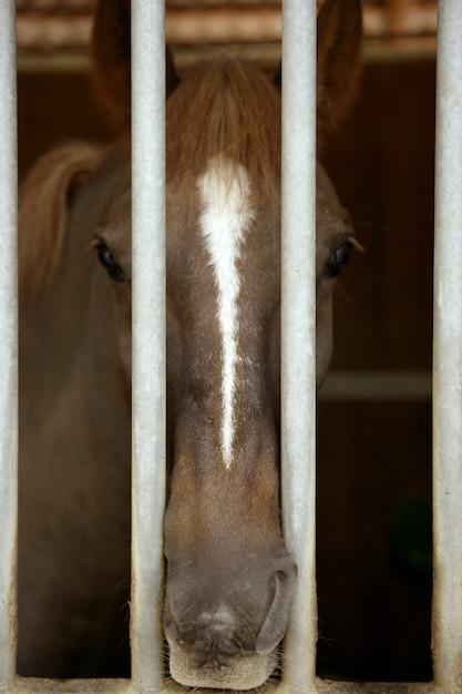 Pferdeporträt, traurig auf der anderen seite des stallgefängnisses Premium Fotos