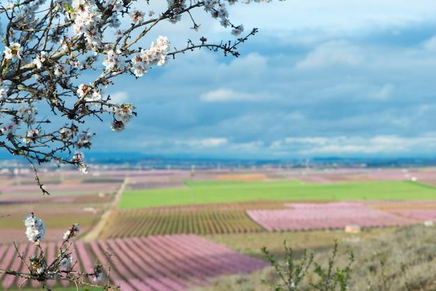 Pfirsiche blühen Premium Fotos