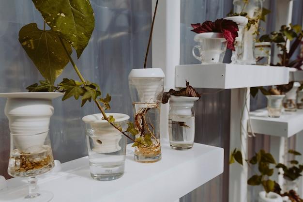 Pflanzen auf weißen regalen in einem glashaus Kostenlose Fotos