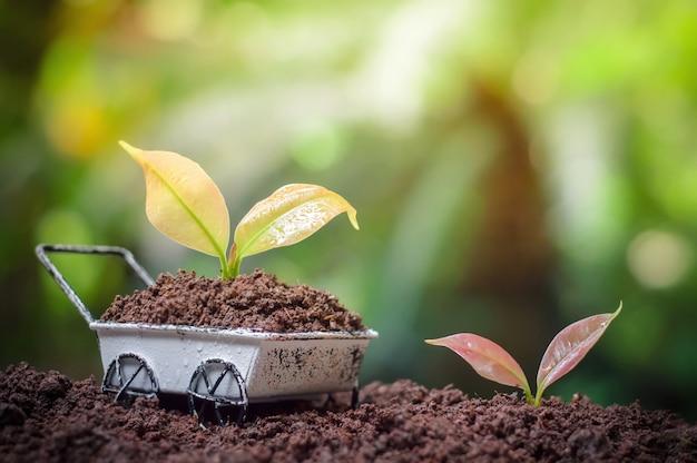Pflanzen, die auf schubkarre aufwachsen Premium Fotos