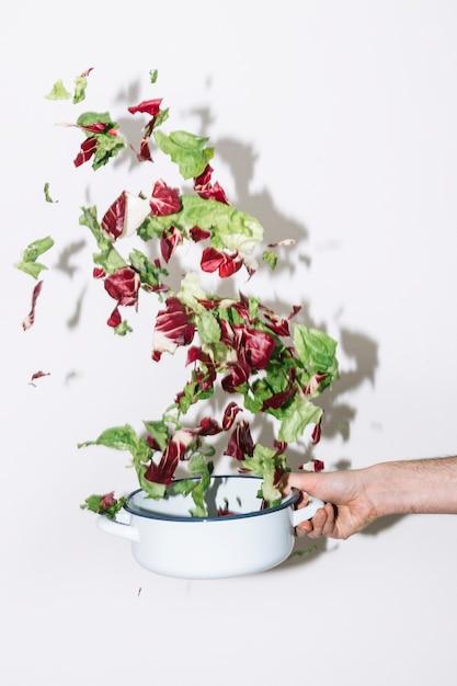 pflanzen sie die hand die kasserolle mit salat r ttelt download der kostenlosen fotos