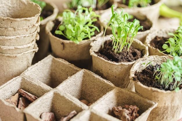 Pflanzen sie im sämlings-torftopf auf einem holztisch Premium Fotos