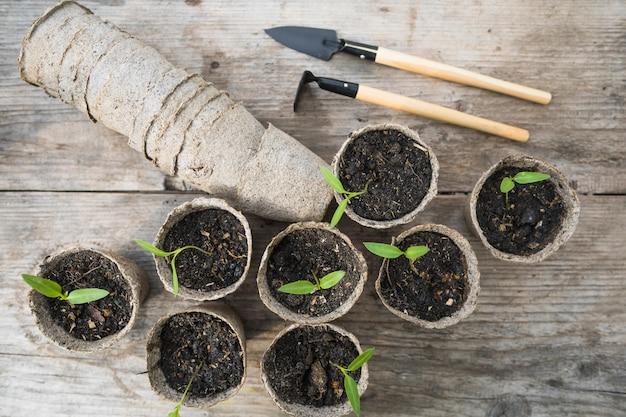 Pflanzen- und gartenstillleben Kostenlose Fotos