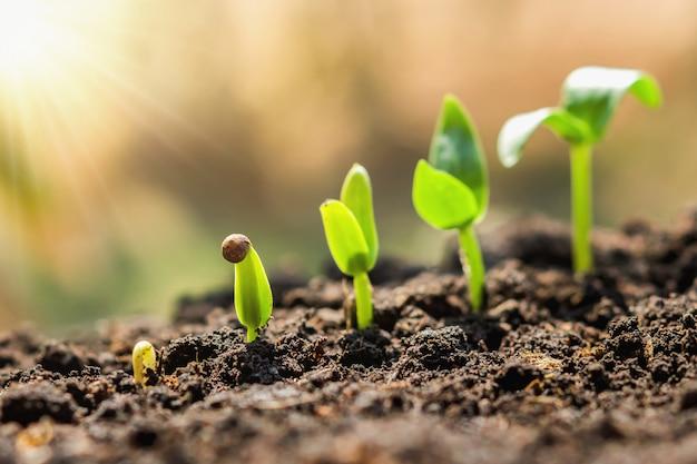 Pflanzensaat-wachstumsschritt. konzept landwirtschaft Premium Fotos