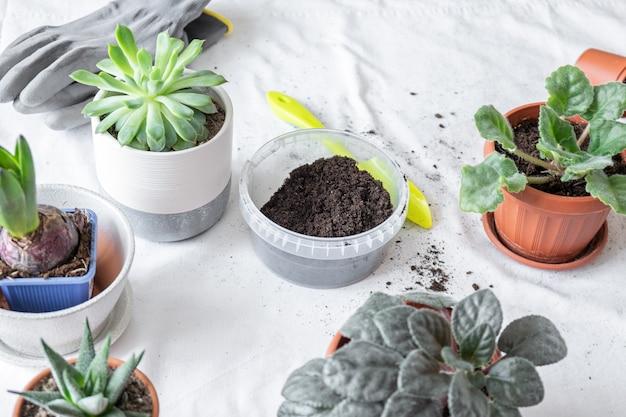 Pflanzentransplantation, erde, töpfe, werkzeuge zum umpflanzen auf dem tisch. verschiedene pflanzen in verschiedenen töpfen auf dem tisch. konzept des innengartenhauses. Premium Fotos