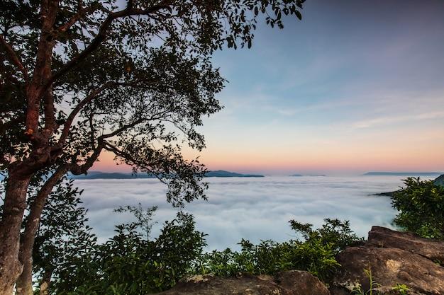 Pha-chom-mok, landschaftsnebelmeer auf dem berg in nongkhai-provinz thailand. Premium Fotos