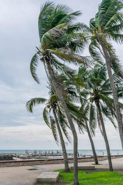 Phuket-seeansicht Premium Fotos