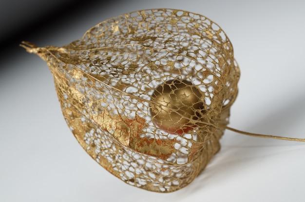 Physalis-skelett in gold lackiert. Premium Fotos