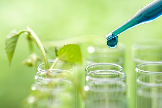 Pipettieren sie das fallenlassen der blauen beispielchemikalie über der jungen beispielanlage, die im reagenzglas, biotechnologieforschungskonzept wächst Premium Fotos