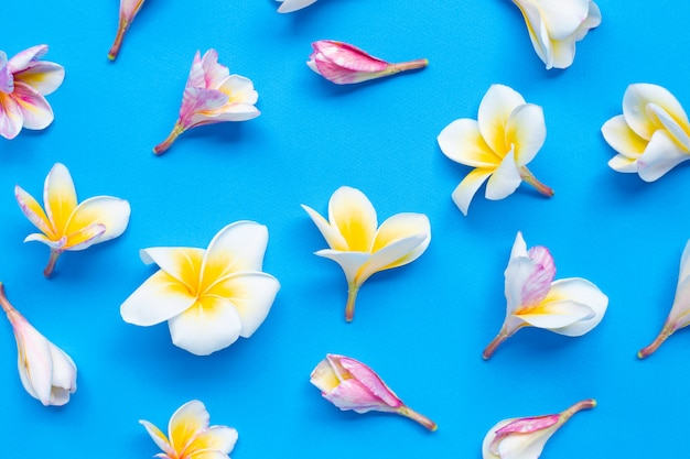 Plumeria- oder frangipaniblume auf blauem hintergrund. Premium Fotos