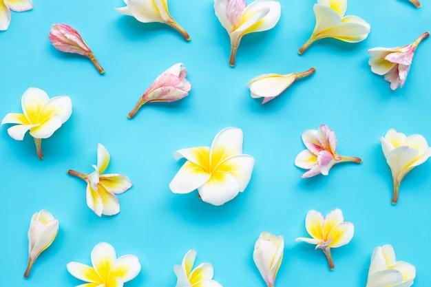 Plumeria- oder frangipaniblume auf blauem nahtlosem muster. ansicht von oben Premium Fotos