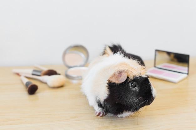 Porträt der guinea mit kosmetikprodukt auf hölzernem schreibtisch gegen weißen hintergrund Kostenlose Fotos