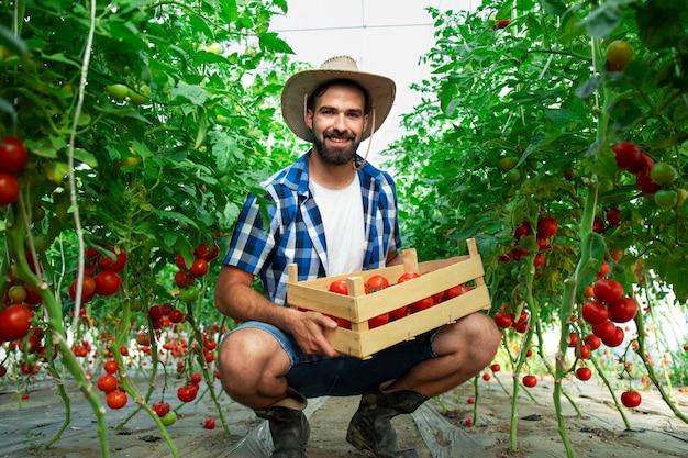Porträt des jungen lächelnden bauern mit frisch gepflücktem tomatengemüse und im treibhausgarten stehend Kostenlose Fotos