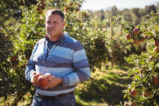 Porträt des landwirts äpfel im apfelgarten halten Kostenlose Fotos