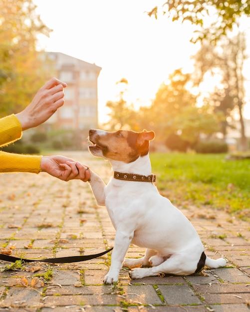 Porträt des netten hundes spielend mit inhaber Kostenlose Fotos