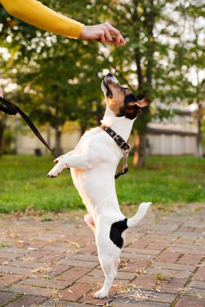 Porträt des netten kleinen hundespielens Kostenlose Fotos