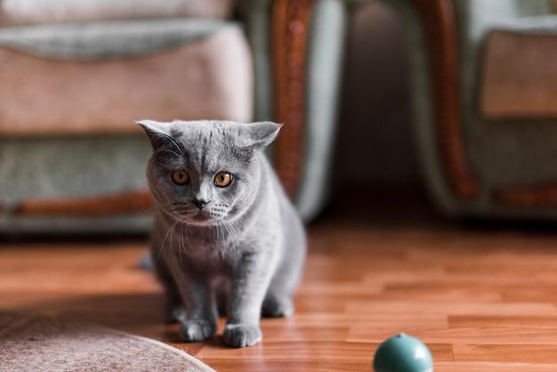 Porträt einer grauen britisch kurzhaar-katze auf fußboden Kostenlose Fotos