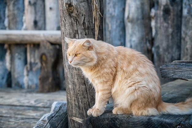 Porträt einer niedlichen flauschigen katze auf der straße Premium Fotos