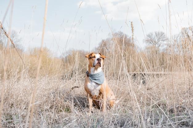 Porträt eines hundes, der zeit in der natur verbringt. Premium Fotos