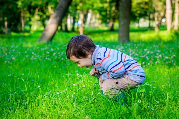 Porträt eines kleinen jungen auf einem hintergrund des grases. kleiner junge in einem pullover. Premium Fotos