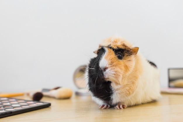 Portrait der guinea mit kosmetikprodukten Kostenlose Fotos