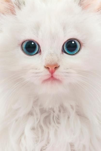 Portrait der jungen weißen katze Premium Fotos