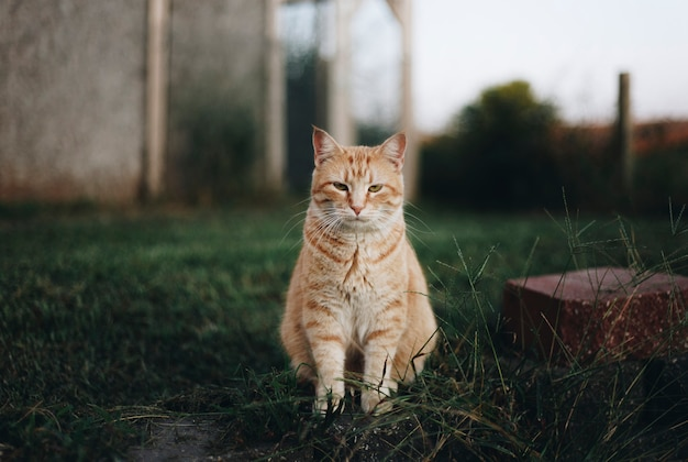 Portrait einer katze Kostenlose Fotos