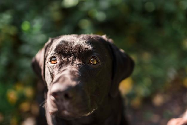 Portrait eines schwarzen labrador im park Kostenlose Fotos