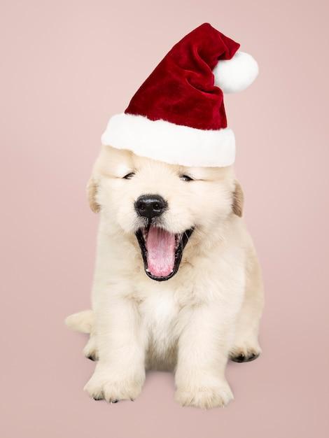 Porträt eines netten Welpen des goldenen Apportierhunds, der einen ...