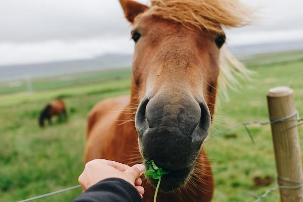 Pov frau füttert wildes pferd Kostenlose Fotos