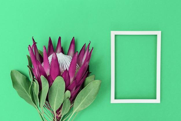Proteablume, große schöne anlage und weißer rahmen auf papieroberfläche. minimaler zusammensetzungshintergrund für postkarte oder einladung für geburtstag, jahrestag, hochzeit. ansicht von oben. Premium Fotos