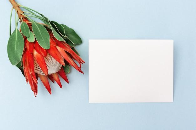 Proteablume, große schöne anlage, weißer buchstabe, auf blauem hintergrund. minimaler zusammensetzungshintergrund für postkarte oder einladung für geburtstag, jahrestag, hochzeit. ansicht von oben. Premium Fotos