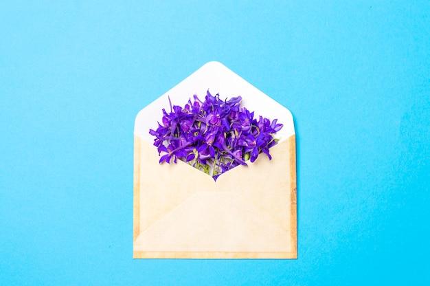 Purpurrote blumen in einem umschlag auf einem blauen hintergrund Premium Fotos