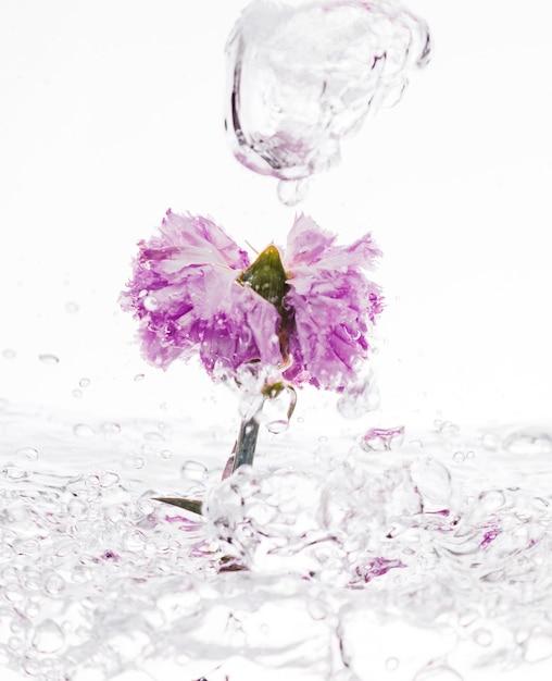 Purpurrote gartennelke, die in wasser fällt Kostenlose Fotos