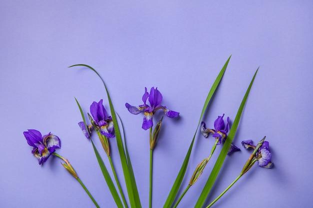 Purpurrote irisblumen auf purpur Premium Fotos